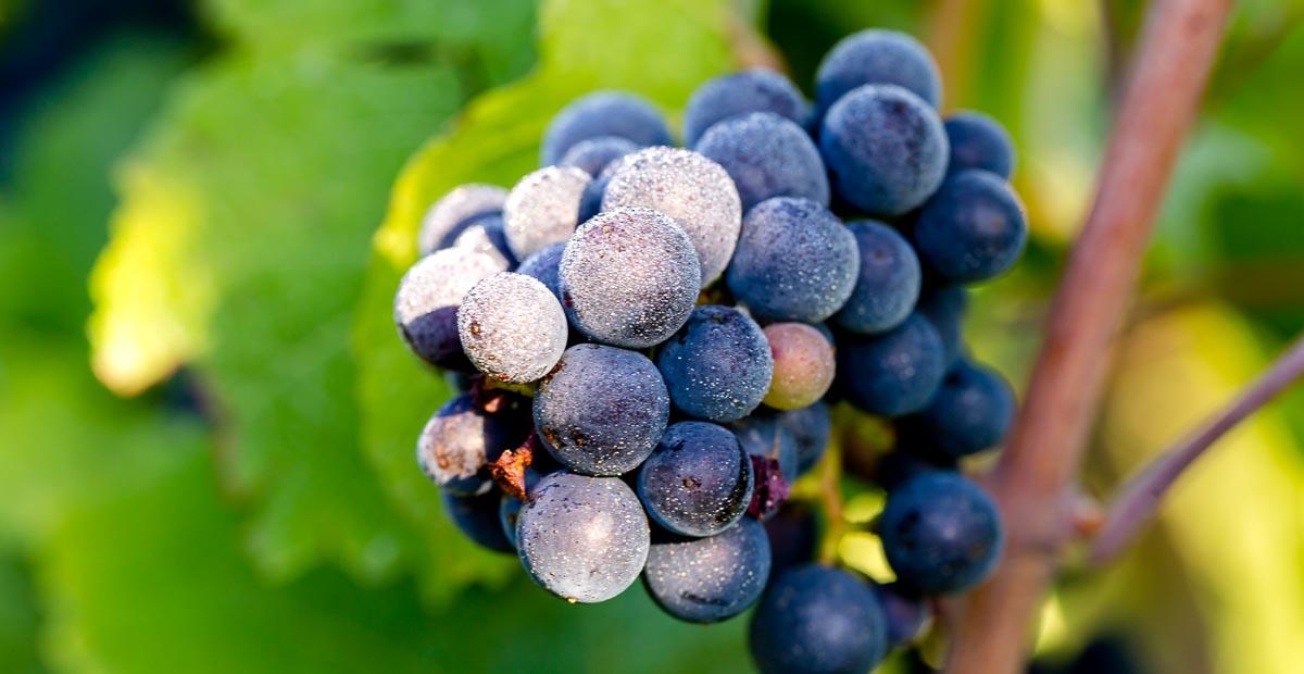 decouverte-vins-de-bourgogne-1